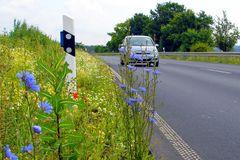 Landstraßen Flora