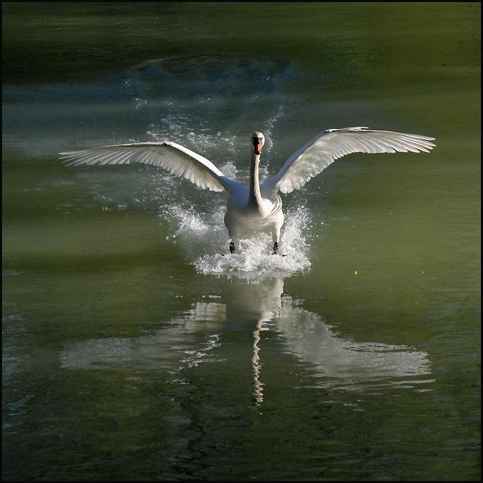 Landung