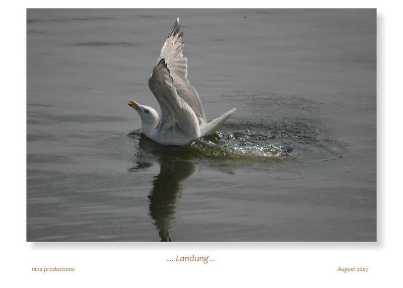 ...: Landung :...