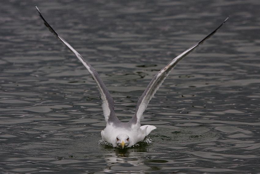 Landung ( Abflug )