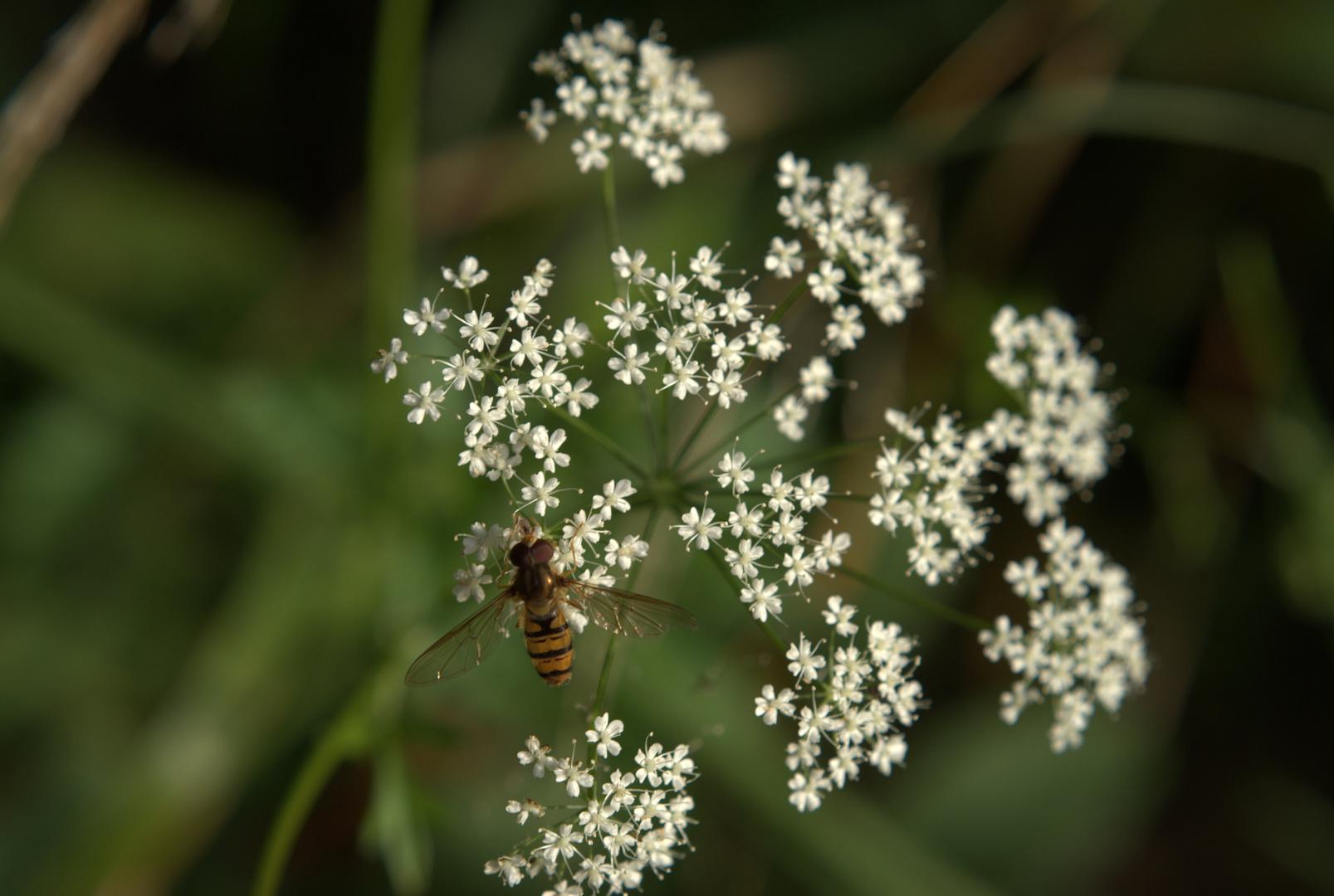Landung auf Blüte