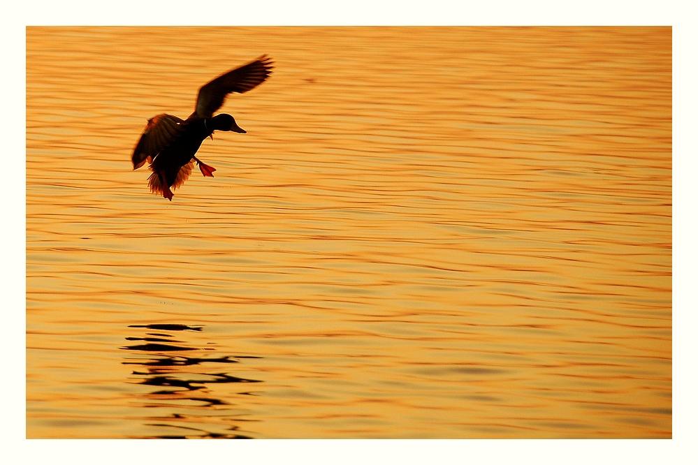 Landung im Gold...