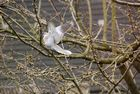Landung im Kirschbaum