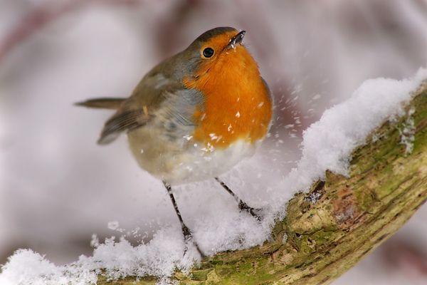 Landung im Schnee