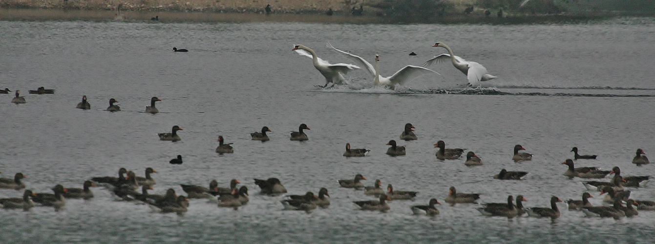 Landung zum Wasser