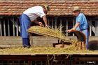 Landwirte beim Dreschen