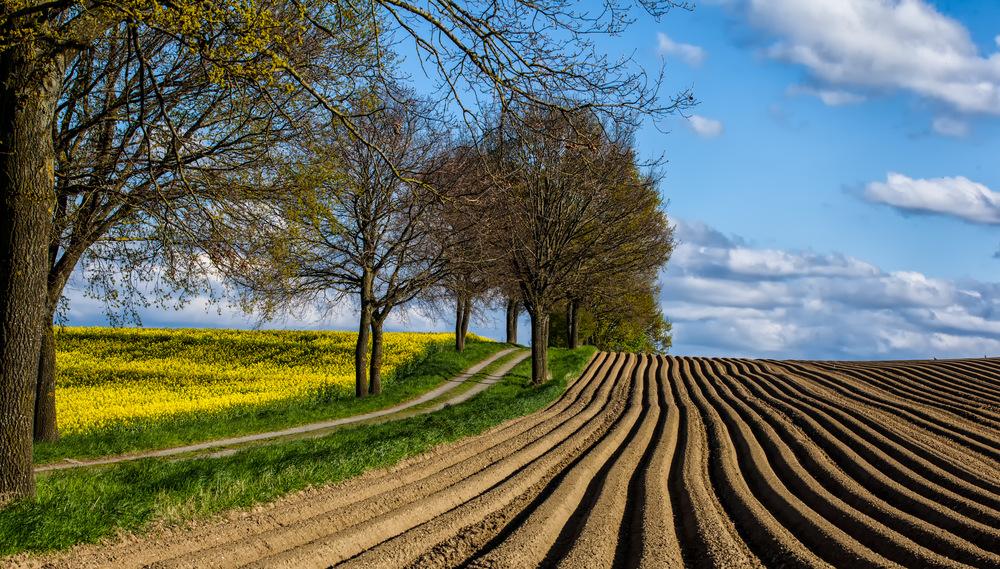 Landwirtschaftliche Linien