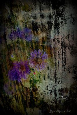 Landwork :....Luoghi dell'anima