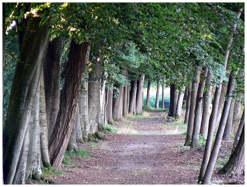 Lane in the forest, Overijsel Netherlands