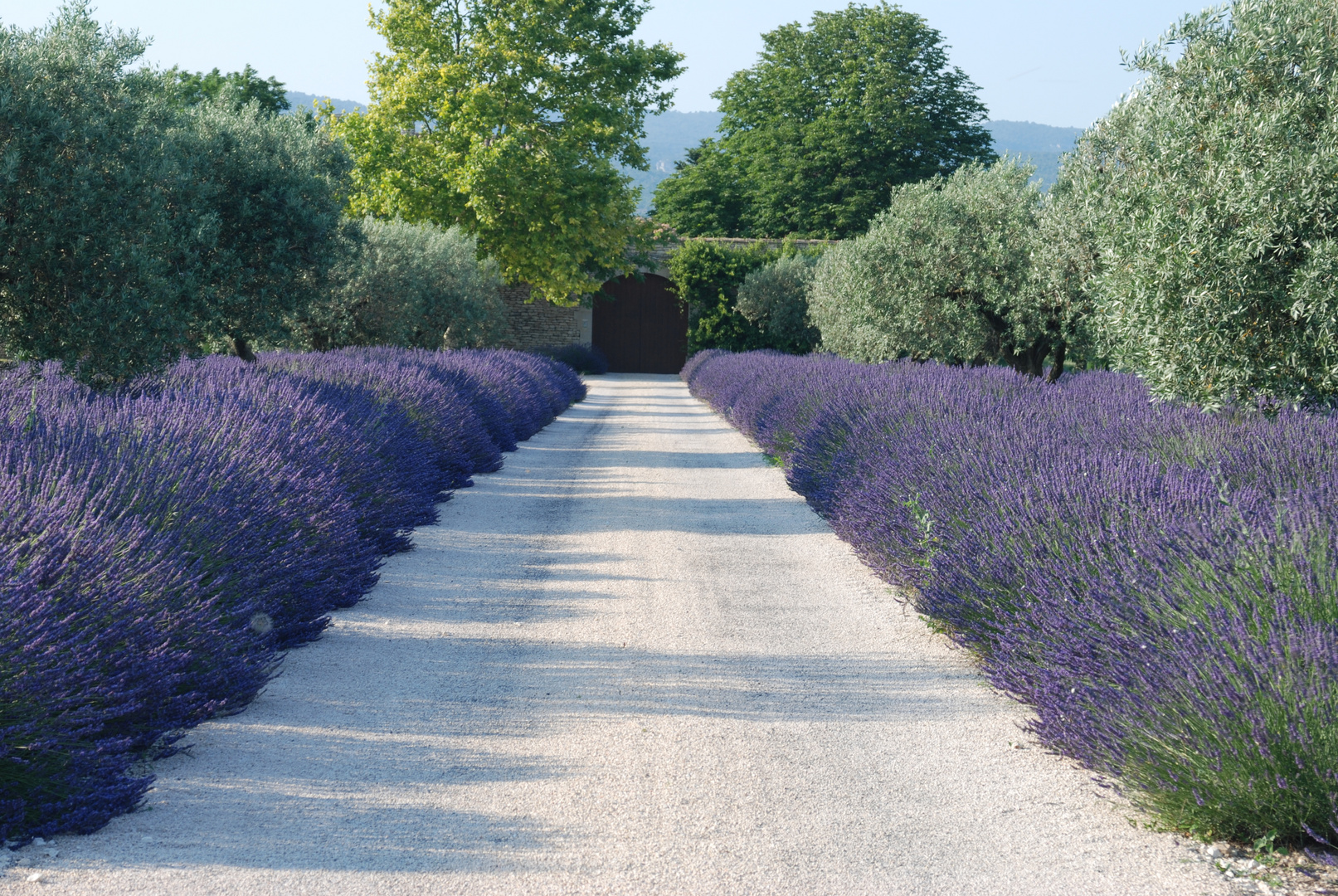 lange Auffahrten, geschmückt mit Lavendel.
