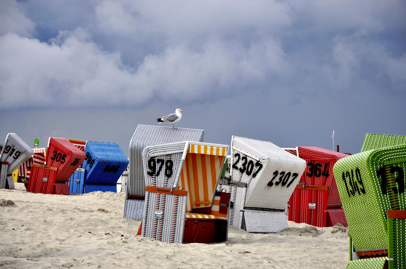 langeoog ~ möwe auf dem strandkorb