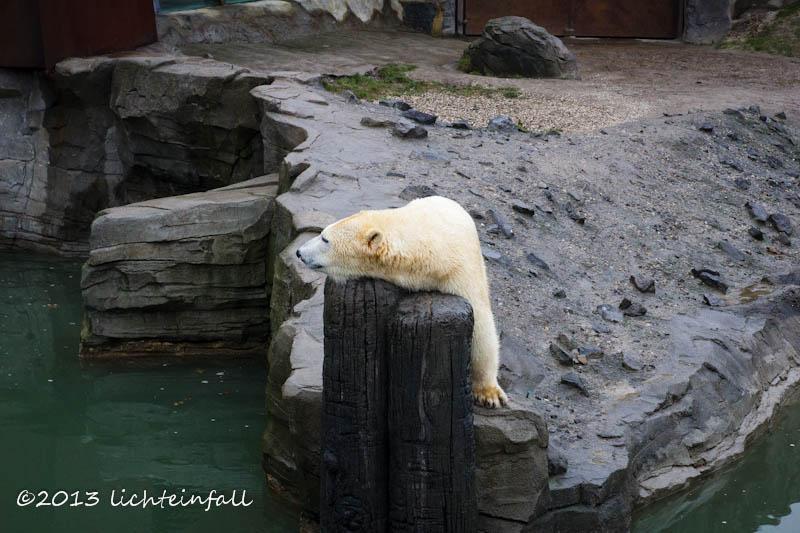 Langeweile im Zoo