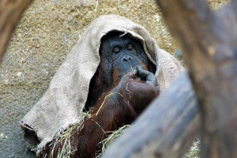 langeweile zoo münster