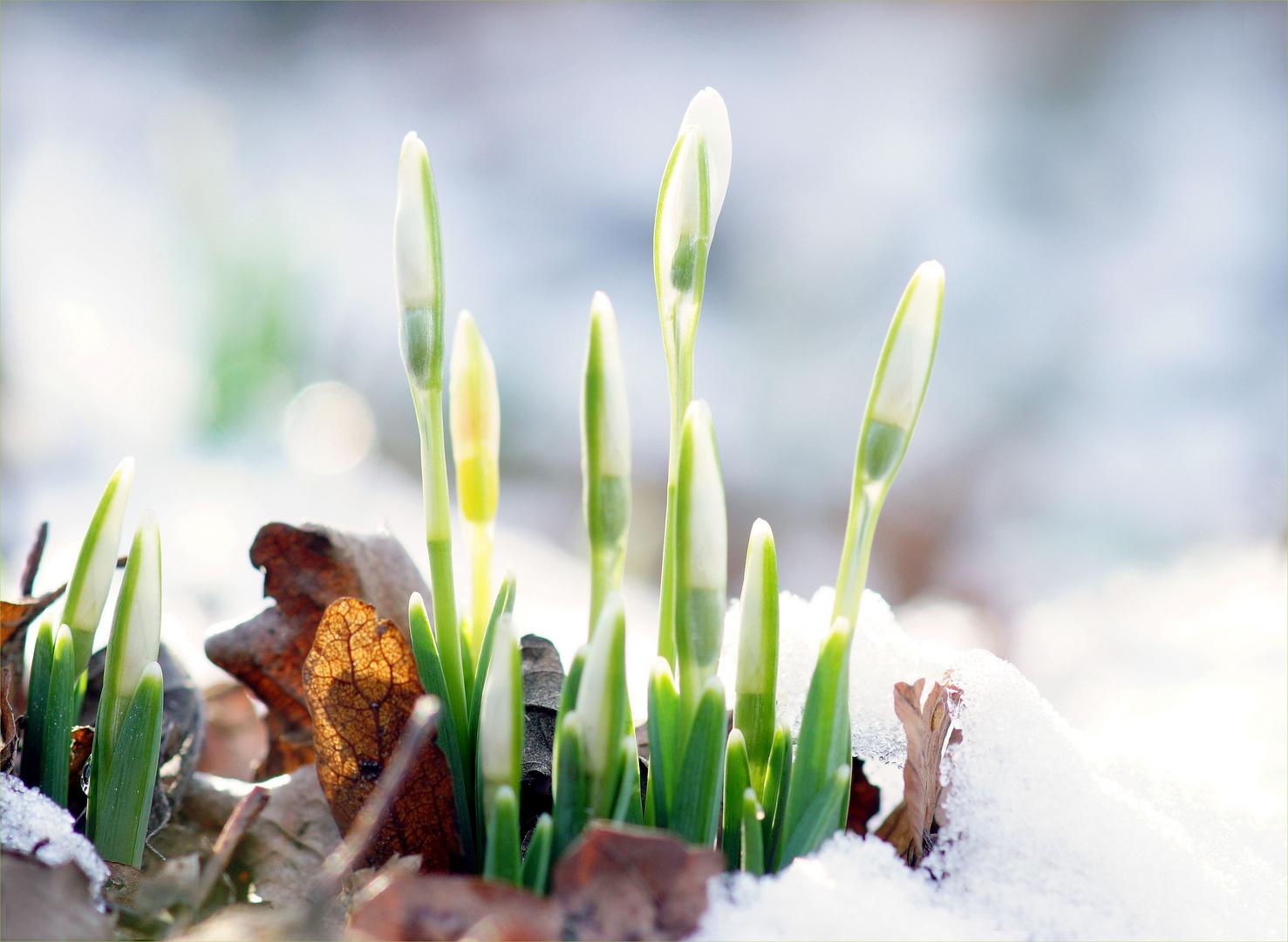 Langsam dem Winter entkrochen