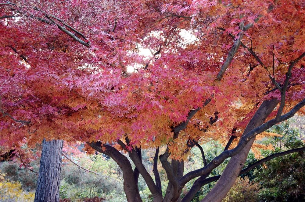 Langsam fallen die Blätter