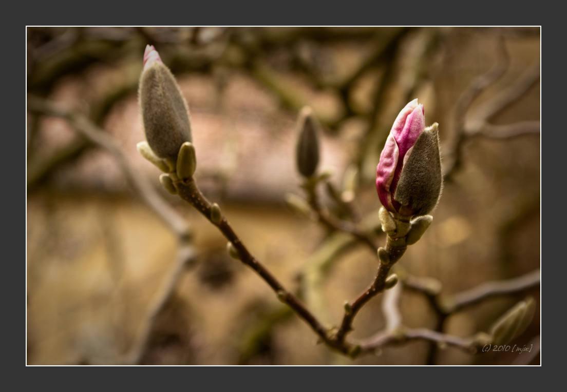 Langsam wird es Frühling...