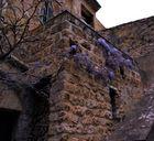 Languedoc violett