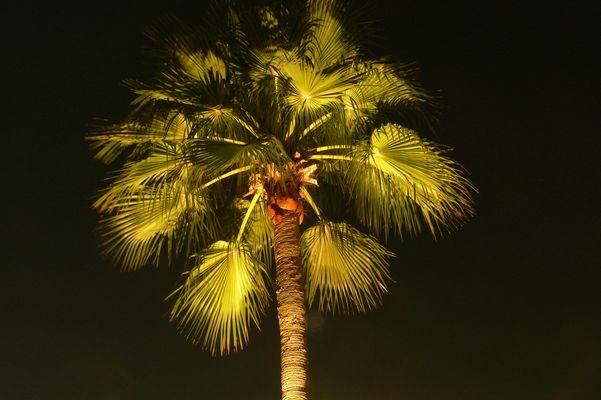 Langzeitbelichtete Palme