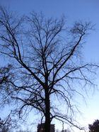 l'anima di un albero