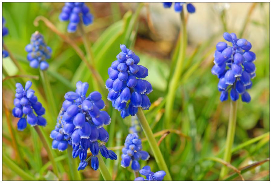 L'annonce du printemps (2)