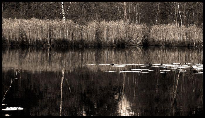Lanser Moor