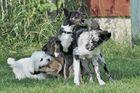 Laokoon-Gruppe aus Hundesicht
