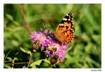 L'ape e la farfalla