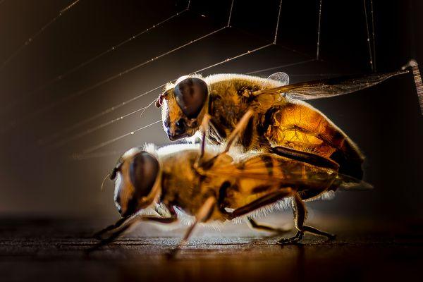 L'ape regina