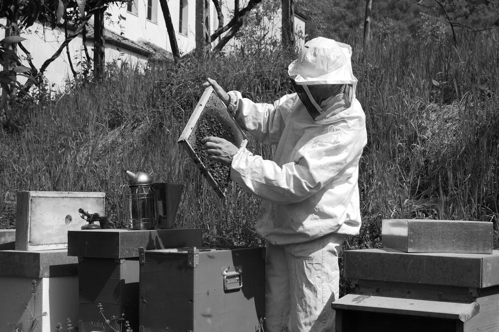 L'apicoltore