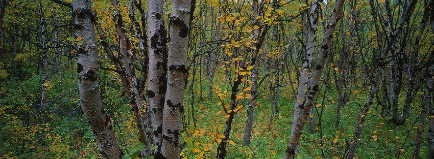 Lappland 2005 #3