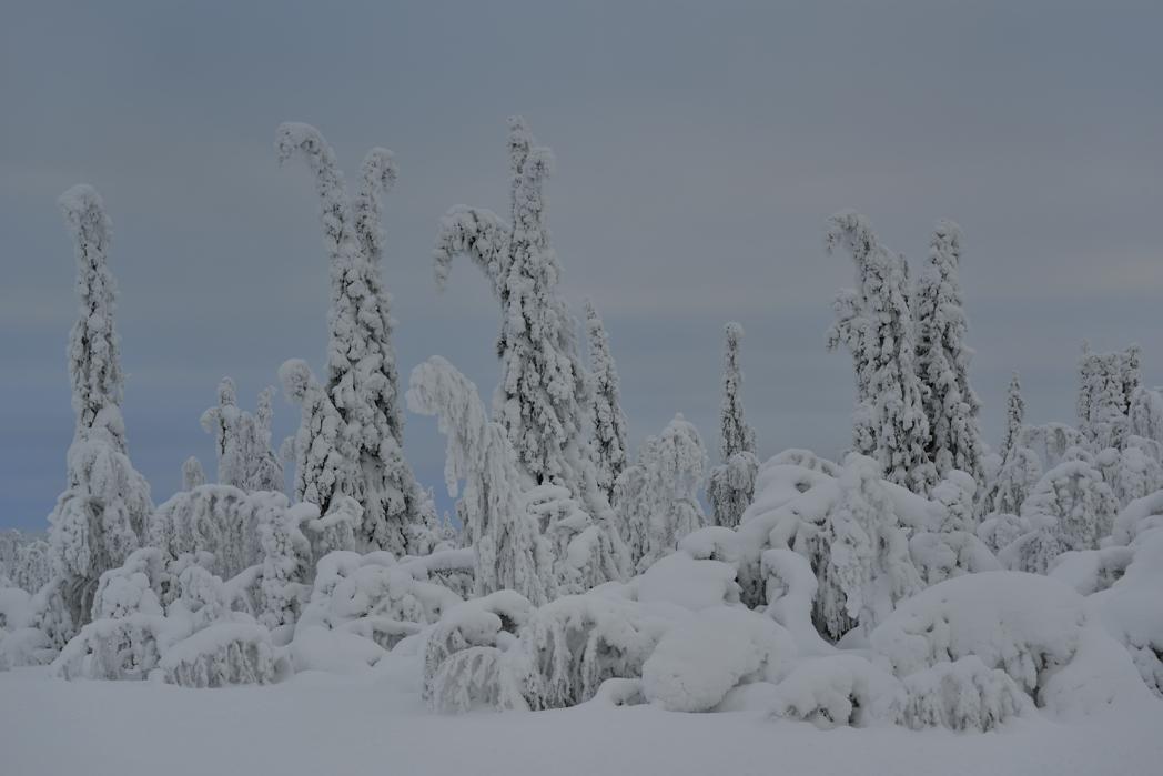 Lappland, Februar 2013