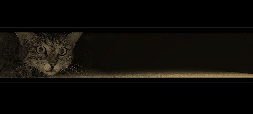 Lara, auf der Lauer (2)