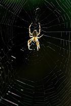 l'araignée dans la lumière , oui mais faut aimer