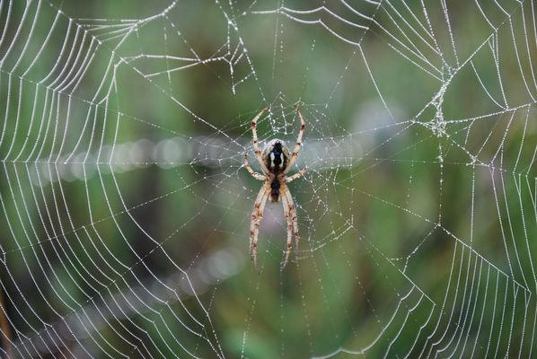 l'araignée du matin...