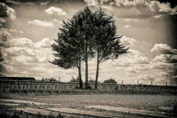 L'arbre .....
