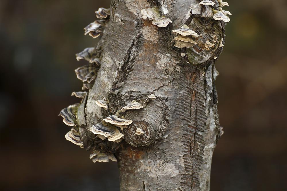 l'arbre à champignons !!!