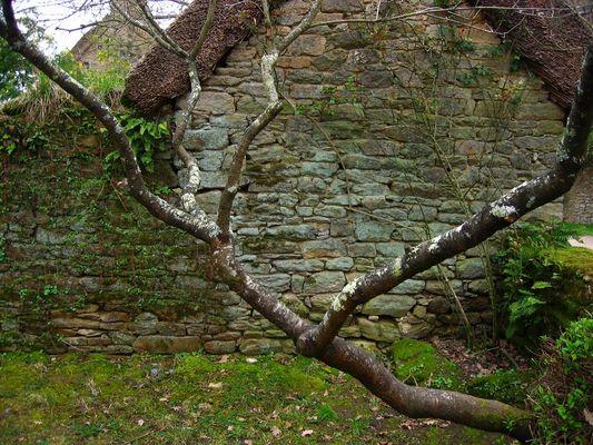 l'arbre au mur
