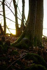 L'arbre au soleil couchant
