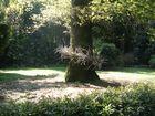 L'arbre auréolé