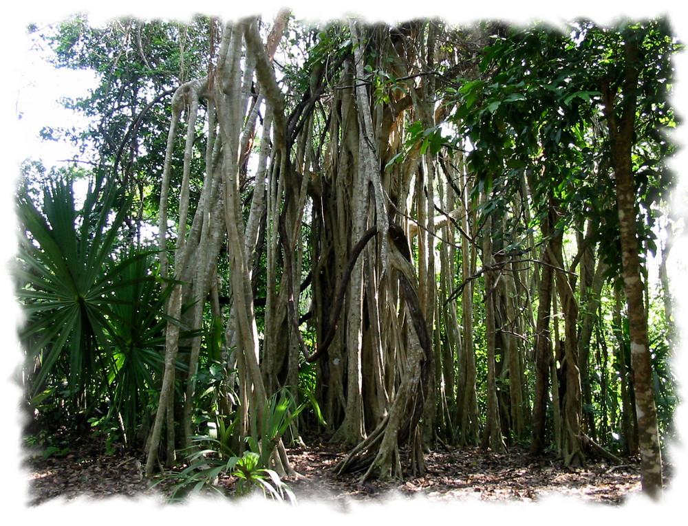 L'arbre aux mille racines