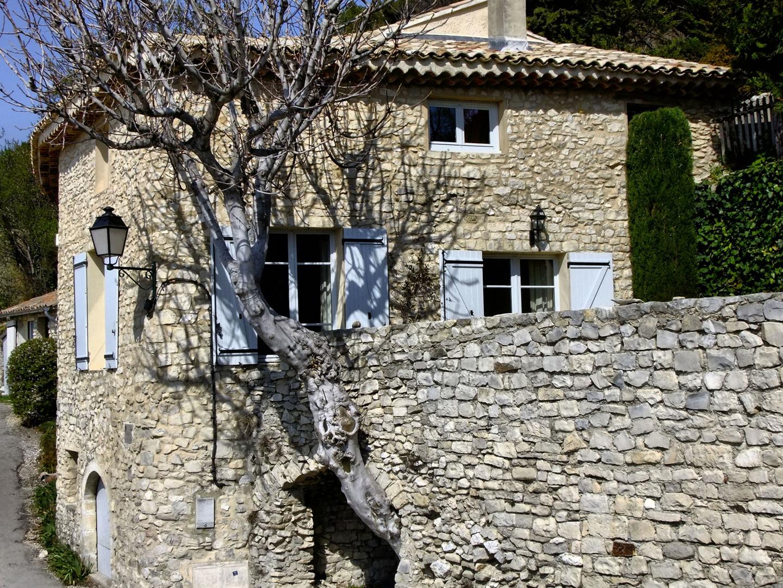 L'arbre dans la maison