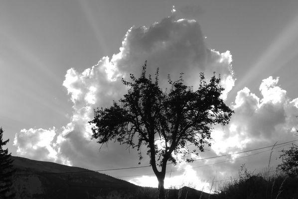 L'arbre dans le nuage