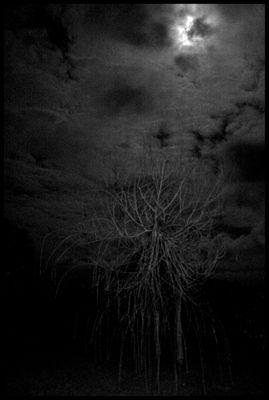 l'arbre de lune