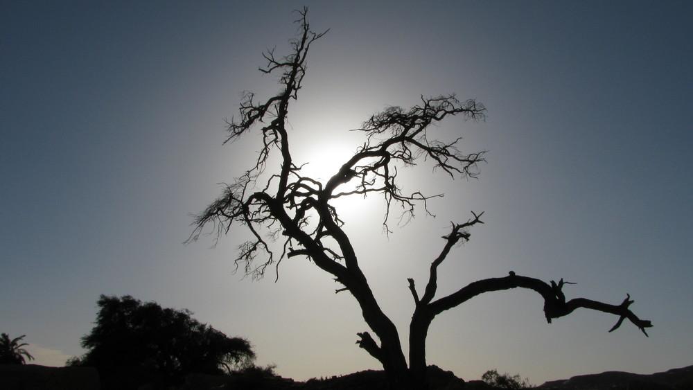 l'arbre du desert