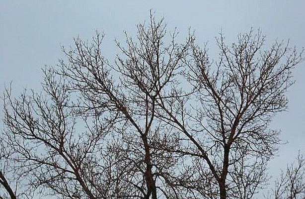 L'arbre écrivain