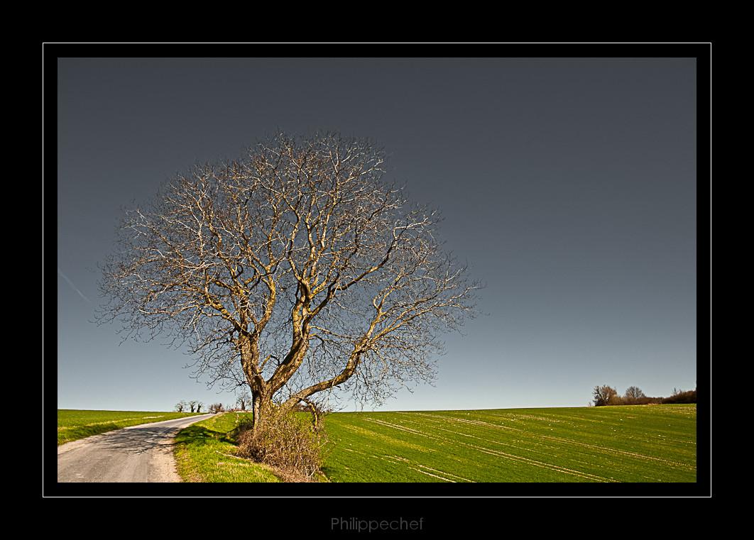 l'arbre en bord de route