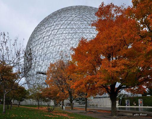 l'arbre et la biosphère