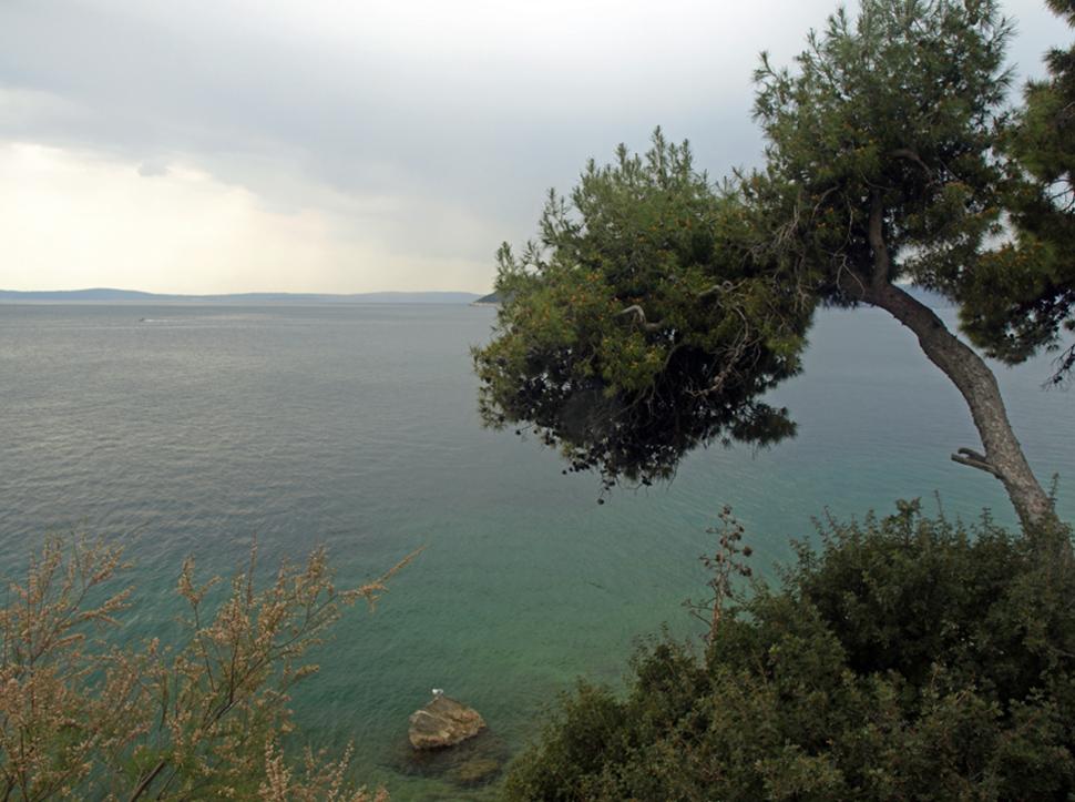 L'arbre et la mer ... Der Baum und die Sonne ...