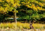 L'arbre et le cerf