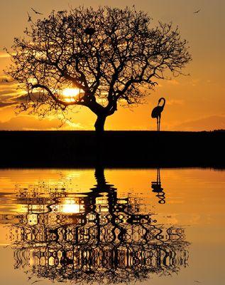 L'arbre et le héron